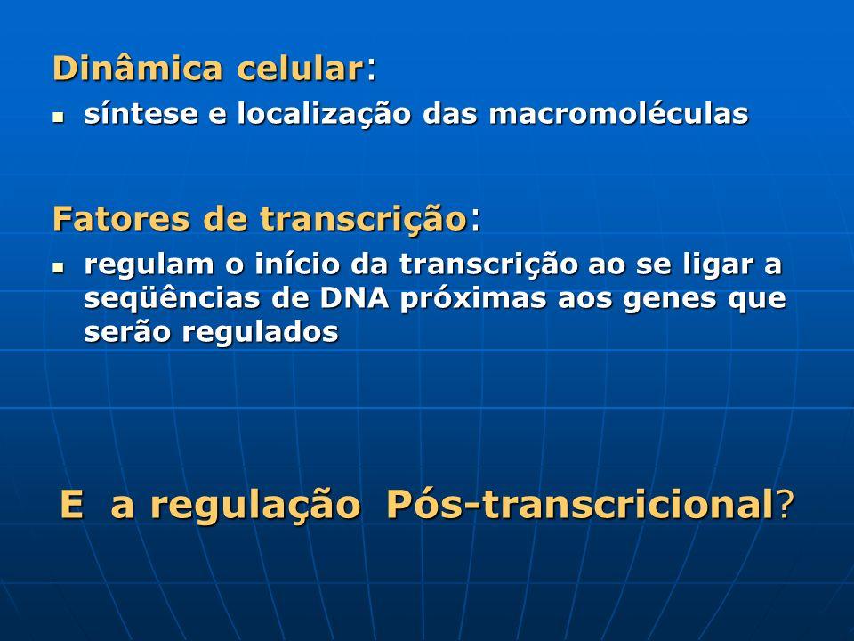 E a regulação Pós-transcricional