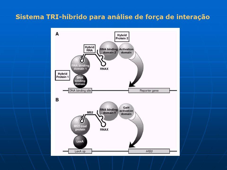 Sistema TRI-híbrido para análise de força de interação