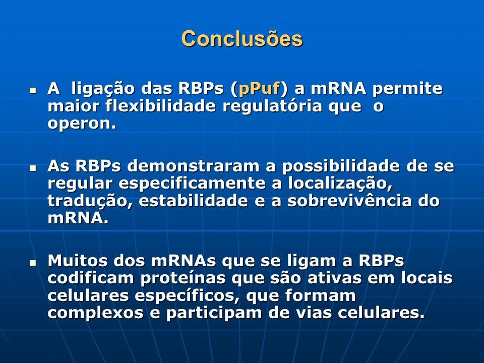 ConclusõesA ligação das RBPs (pPuf) a mRNA permite maior flexibilidade regulatória que o operon.