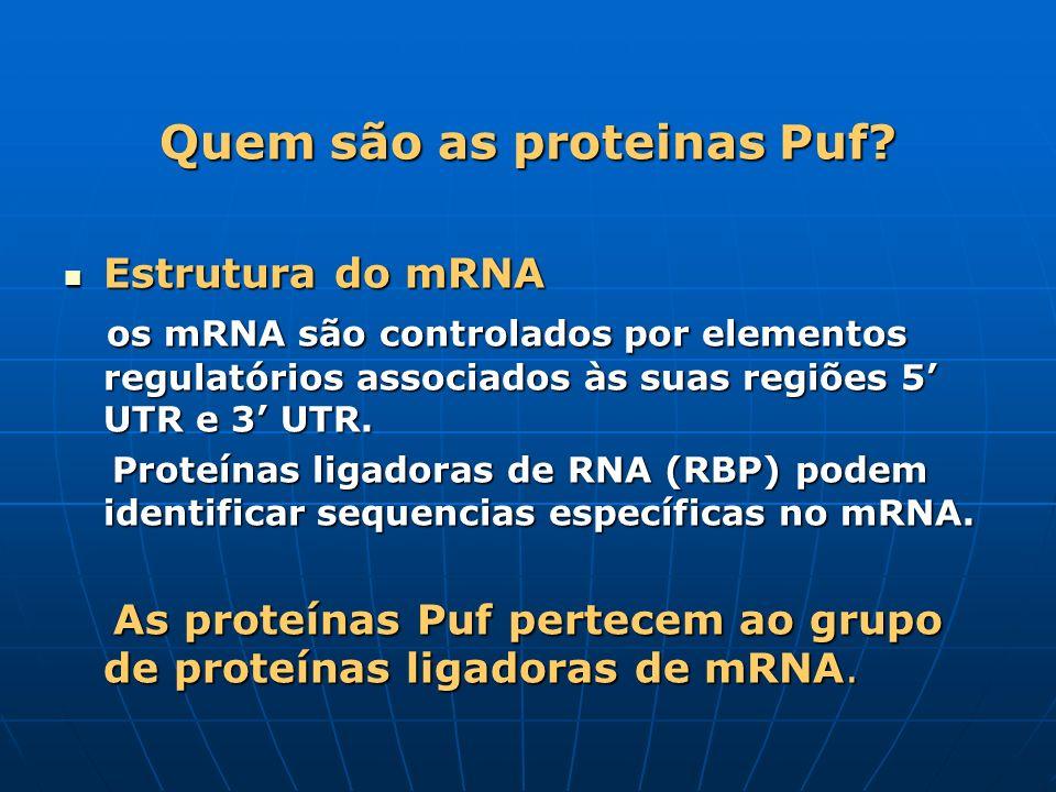 Quem são as proteinas Puf