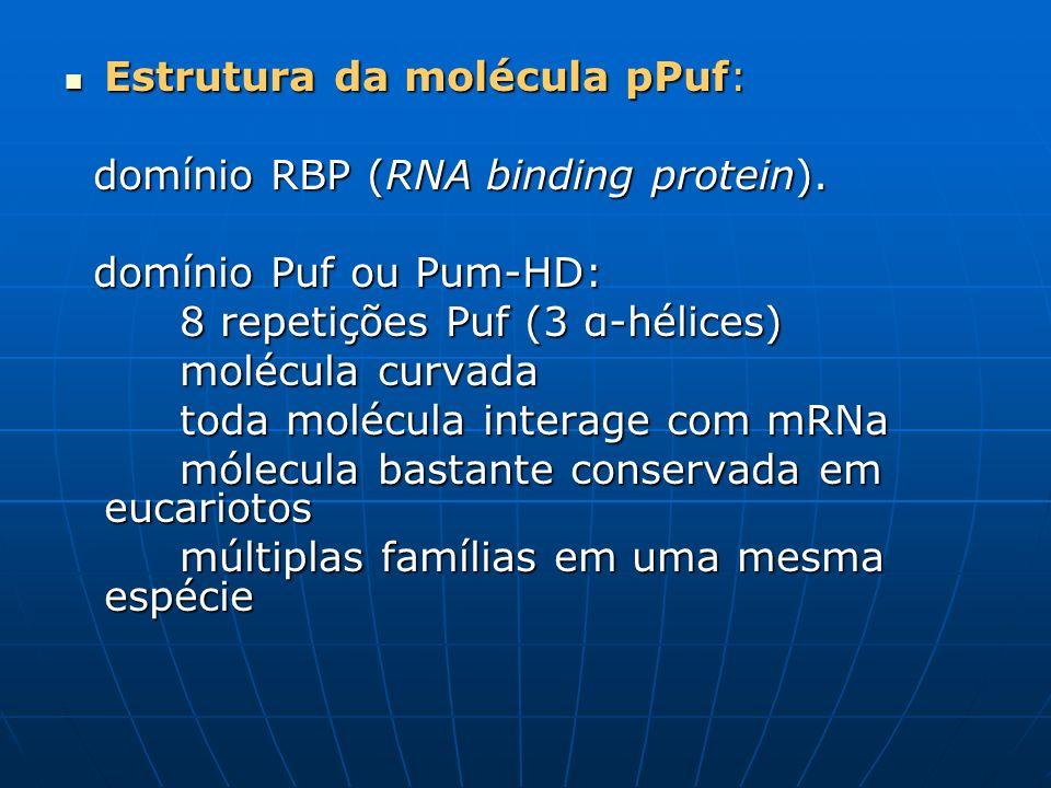 Estrutura da molécula pPuf: