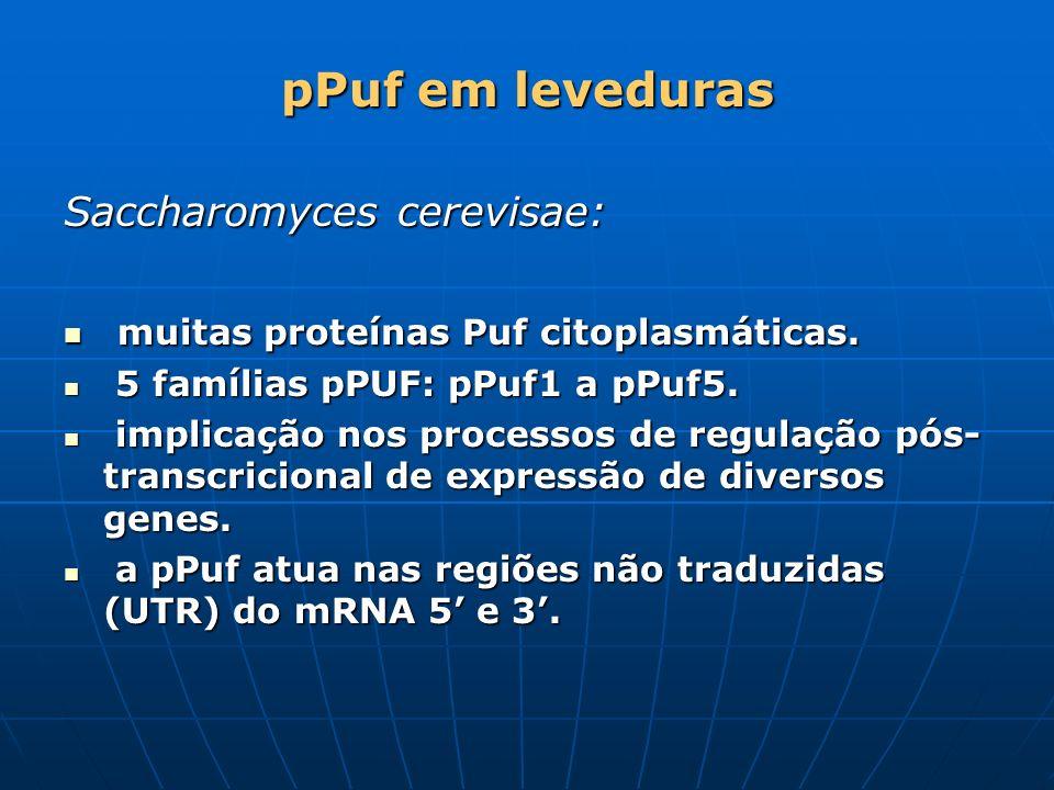 pPuf em leveduras Saccharomyces cerevisae: