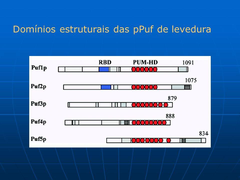 Domínios estruturais das pPuf de levedura