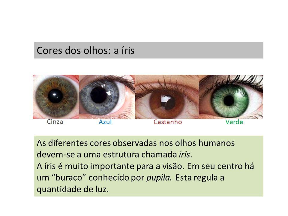 Cores dos olhos: a íris As diferentes cores observadas nos olhos humanos devem-se a uma estrutura chamada íris.