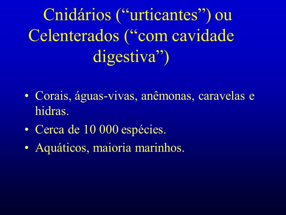 Cnidários ( urticantes ) ou Celenterados ( com cavidade digestiva )