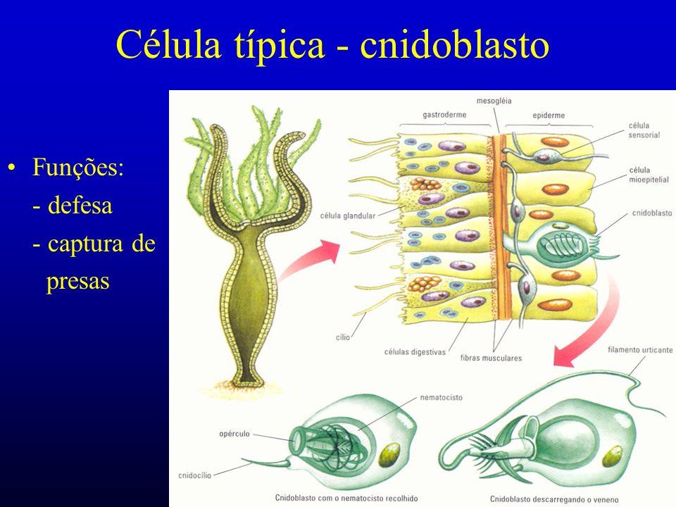 Célula típica - cnidoblasto