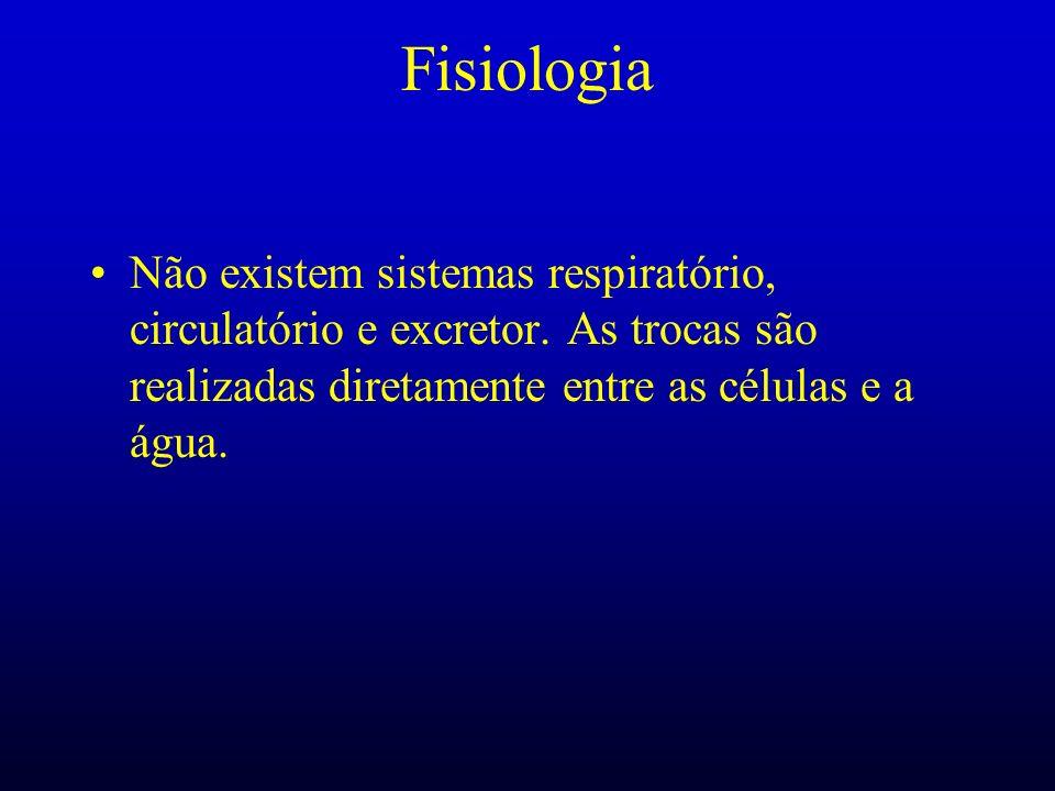 Fisiologia Não existem sistemas respiratório, circulatório e excretor.