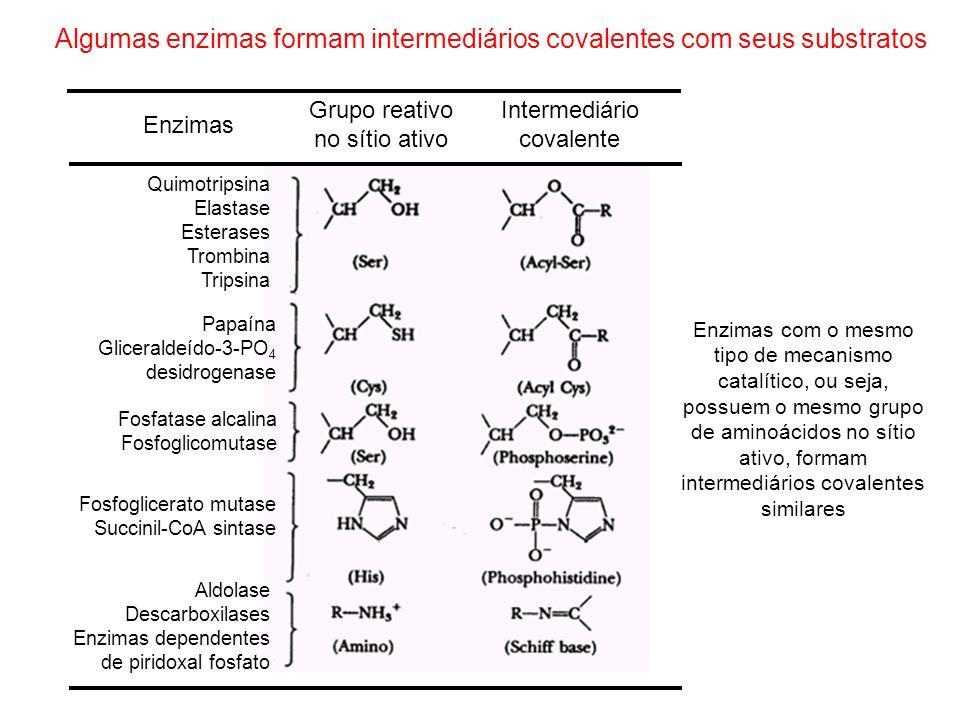 Algumas enzimas formam intermediários covalentes com seus substratos