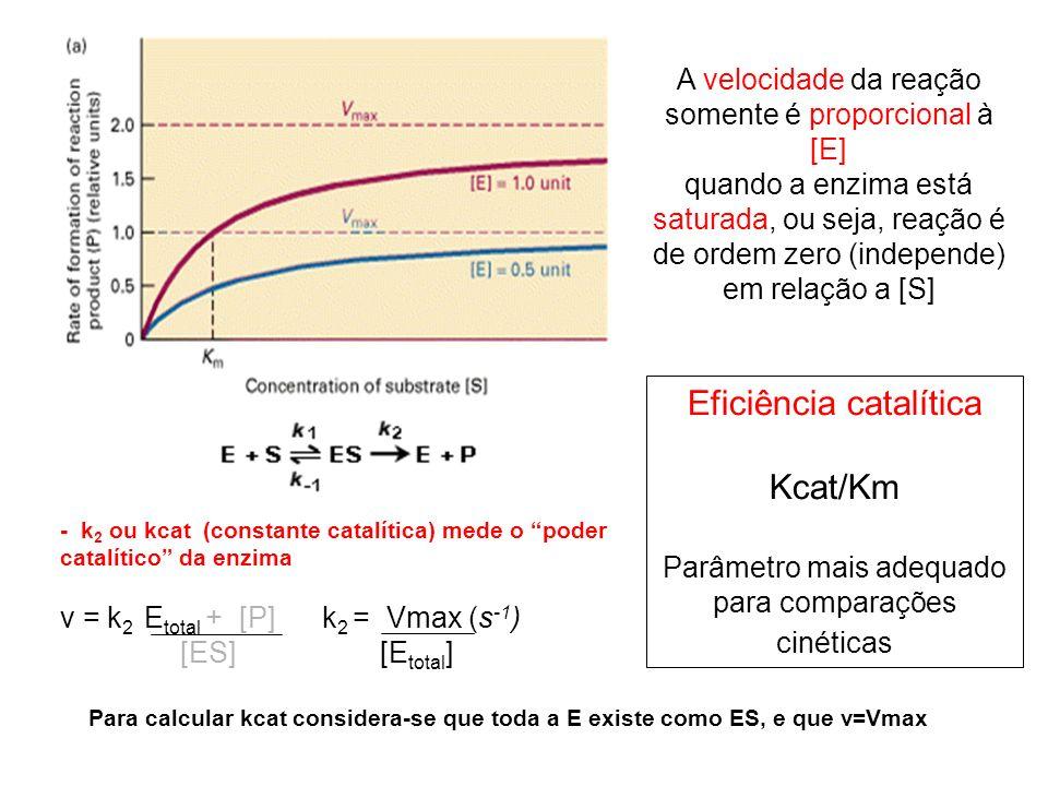 Eficiência catalítica Kcat/Km