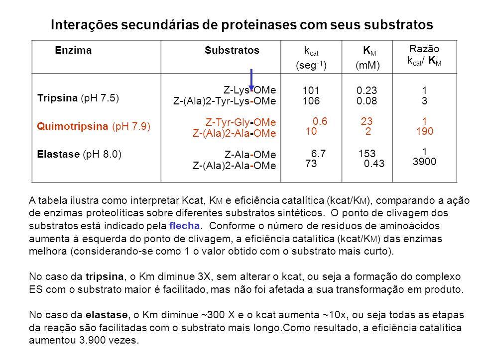Interações secundárias de proteinases com seus substratos