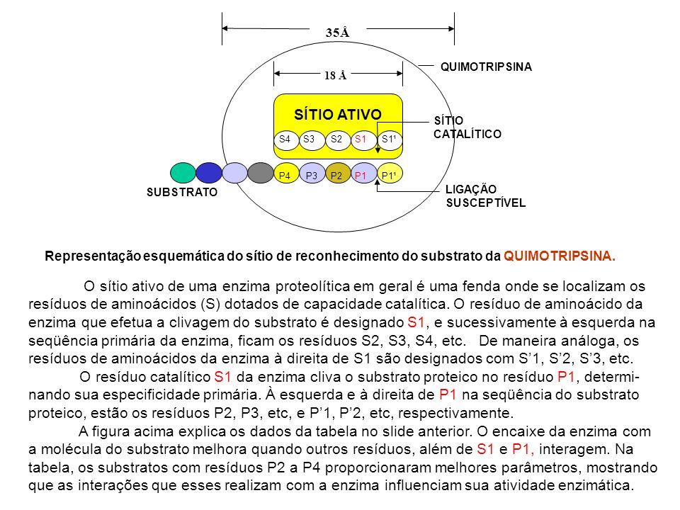 SÍTIO ATIVOS4 S3 S2 S1 S1¹. 18 Å. 35Å. SÍTIO CATALÍTICO. LIGAÇÃO SUSCEPTÍVEL. QUIMOTRIPSINA.