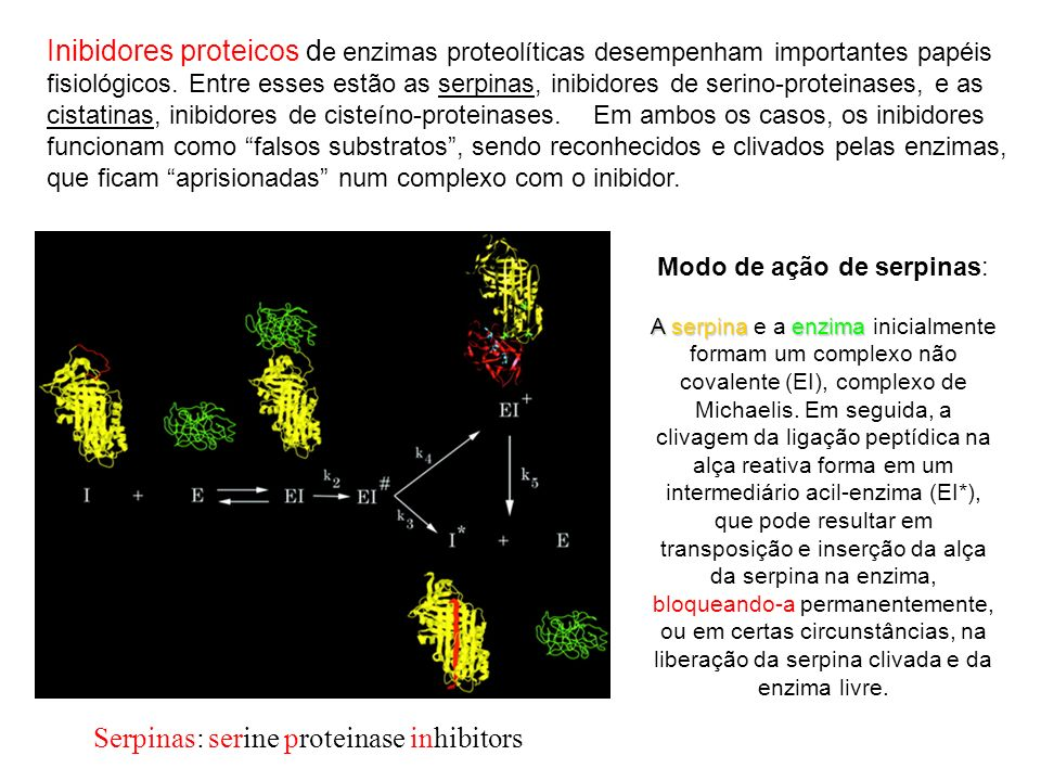 Serpinas: serine proteinase inhibitors
