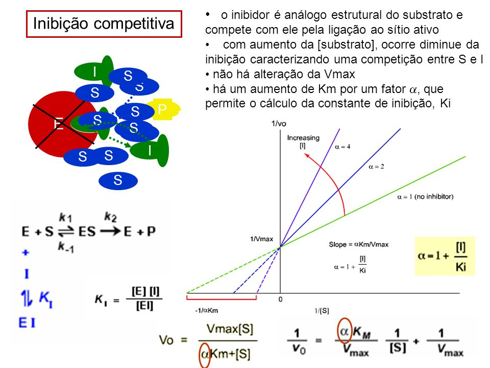 Inibição competitiva E o inibidor é análogo estrutural do substrato e