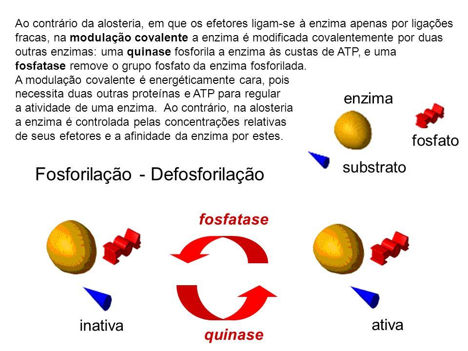 Fosforilação - Defosforilação