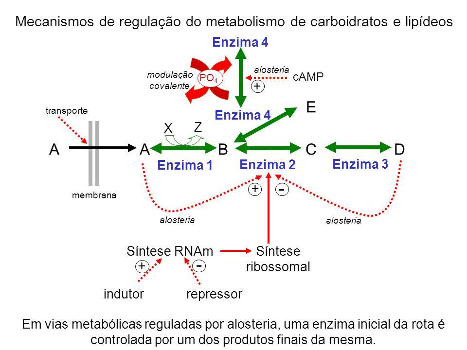 Mecanismos de regulação do metabolismo de carboidratos e lipídeos