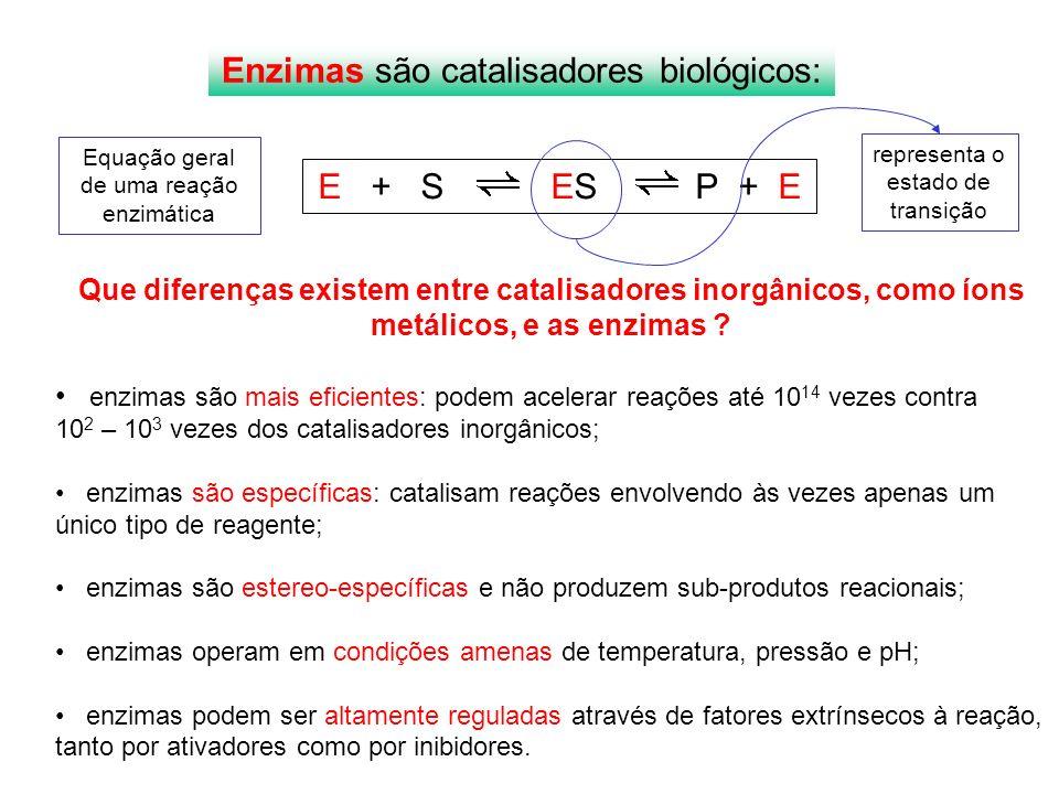Enzimas são catalisadores biológicos: