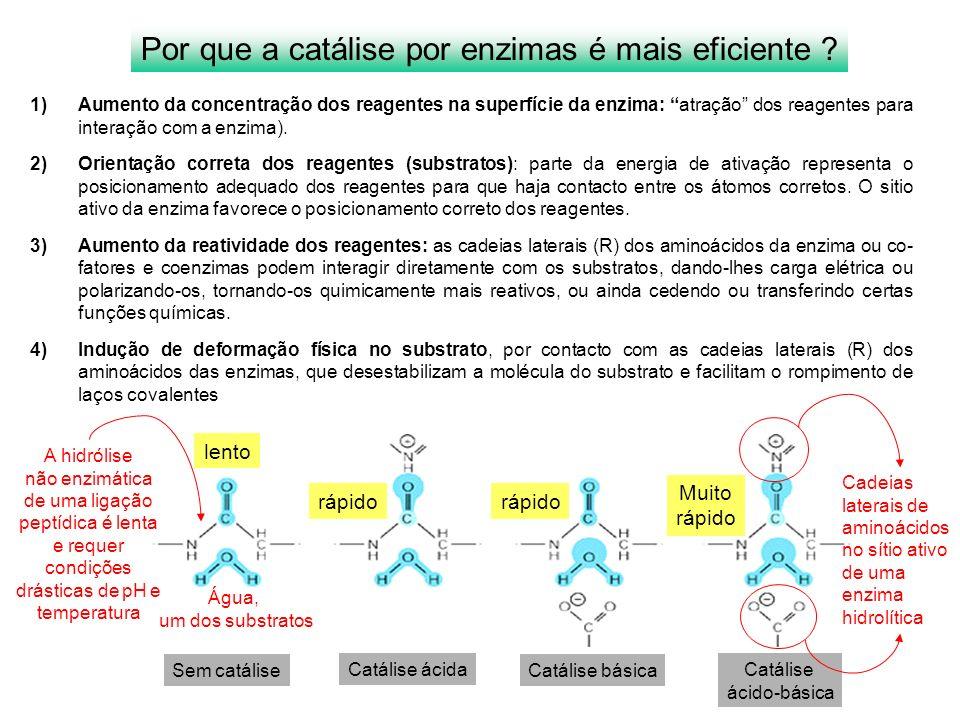 Por que a catálise por enzimas é mais eficiente