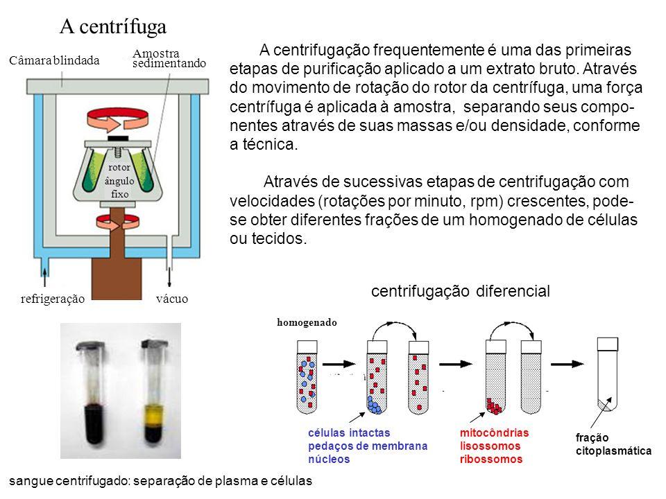 A centrífuga centrifugação diferencial
