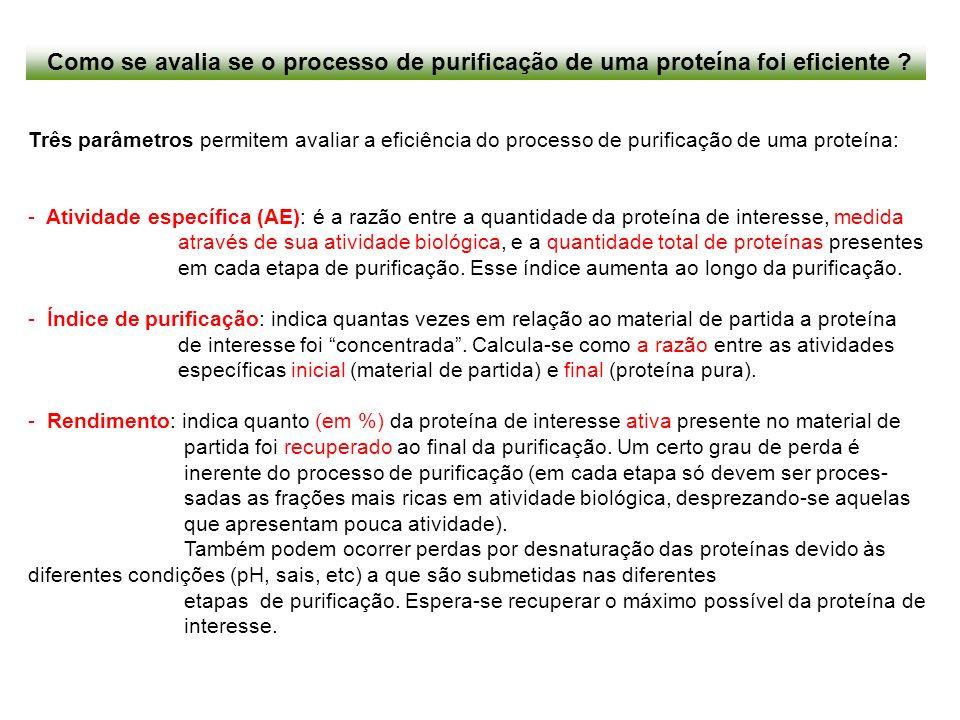 Como se avalia se o processo de purificação de uma proteína foi eficiente