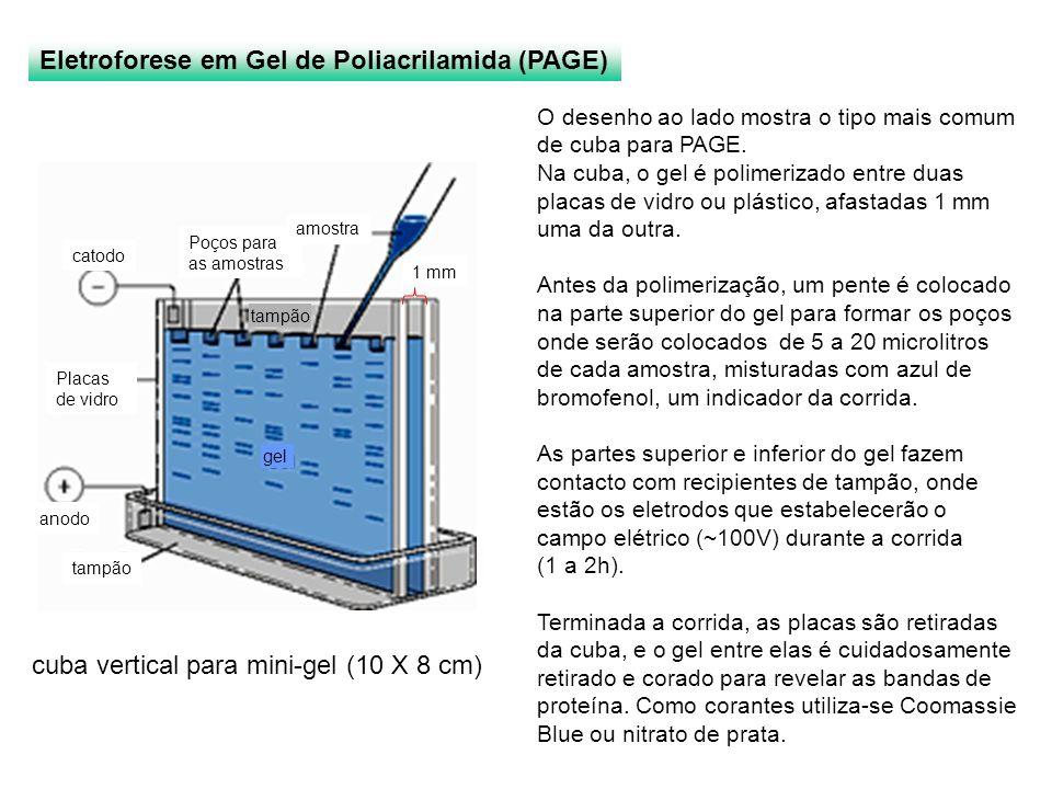 cuba vertical para mini-gel (10 X 8 cm)