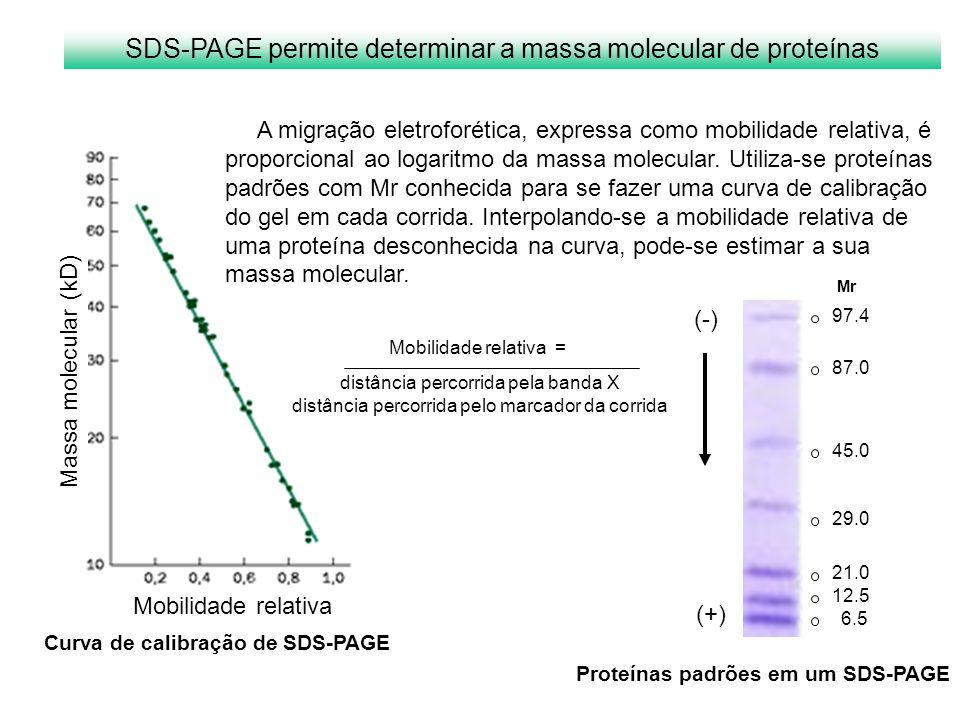 SDS-PAGE permite determinar a massa molecular de proteínas
