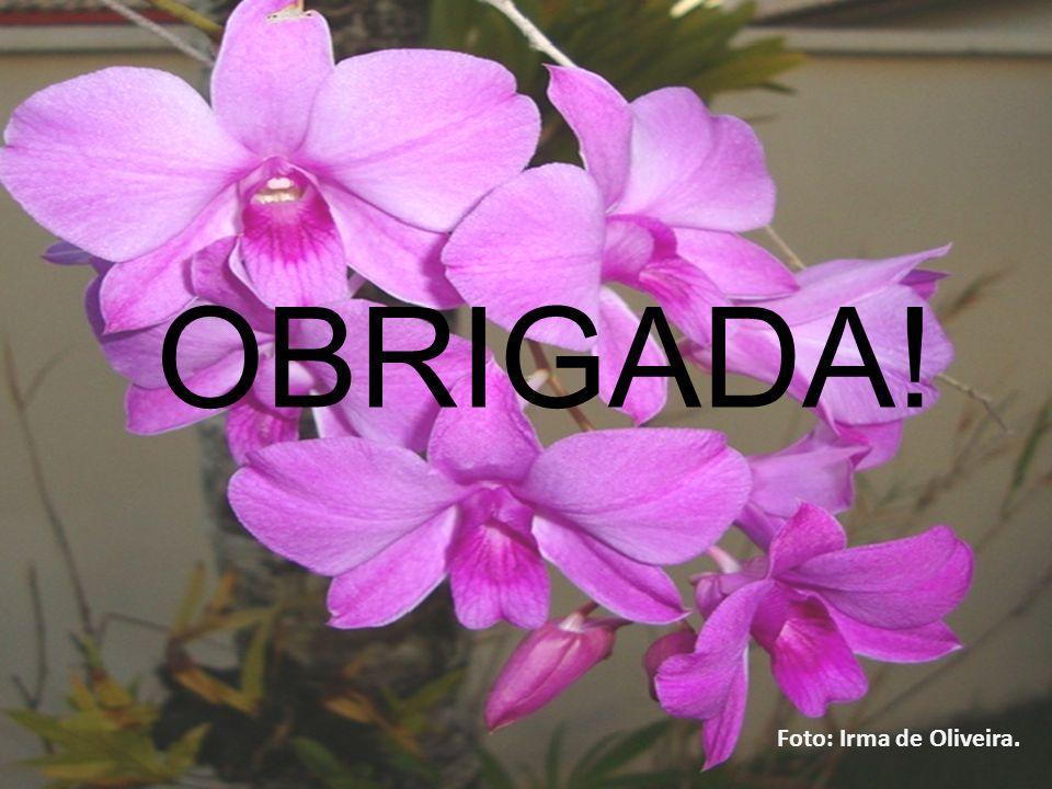 17171717 OBRIGADA! Foto: Irma de Oliveira. 23/03/2017