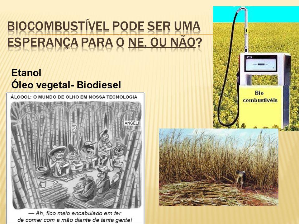 Biocombustível Pode ser uma esperança para o NE, ou não