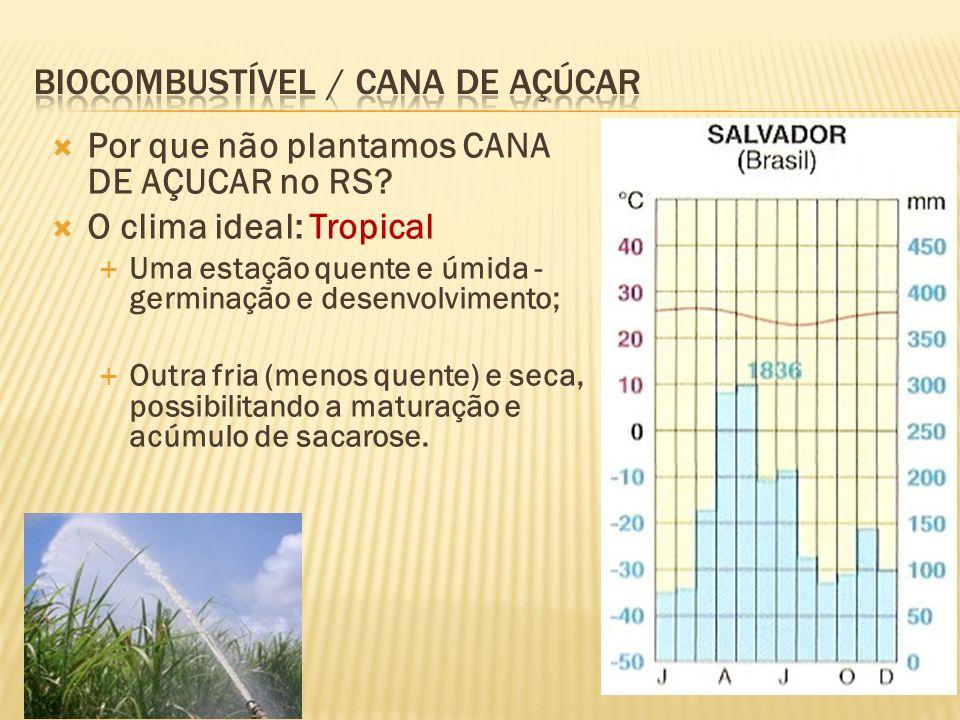Biocombustível / Cana de Açúcar