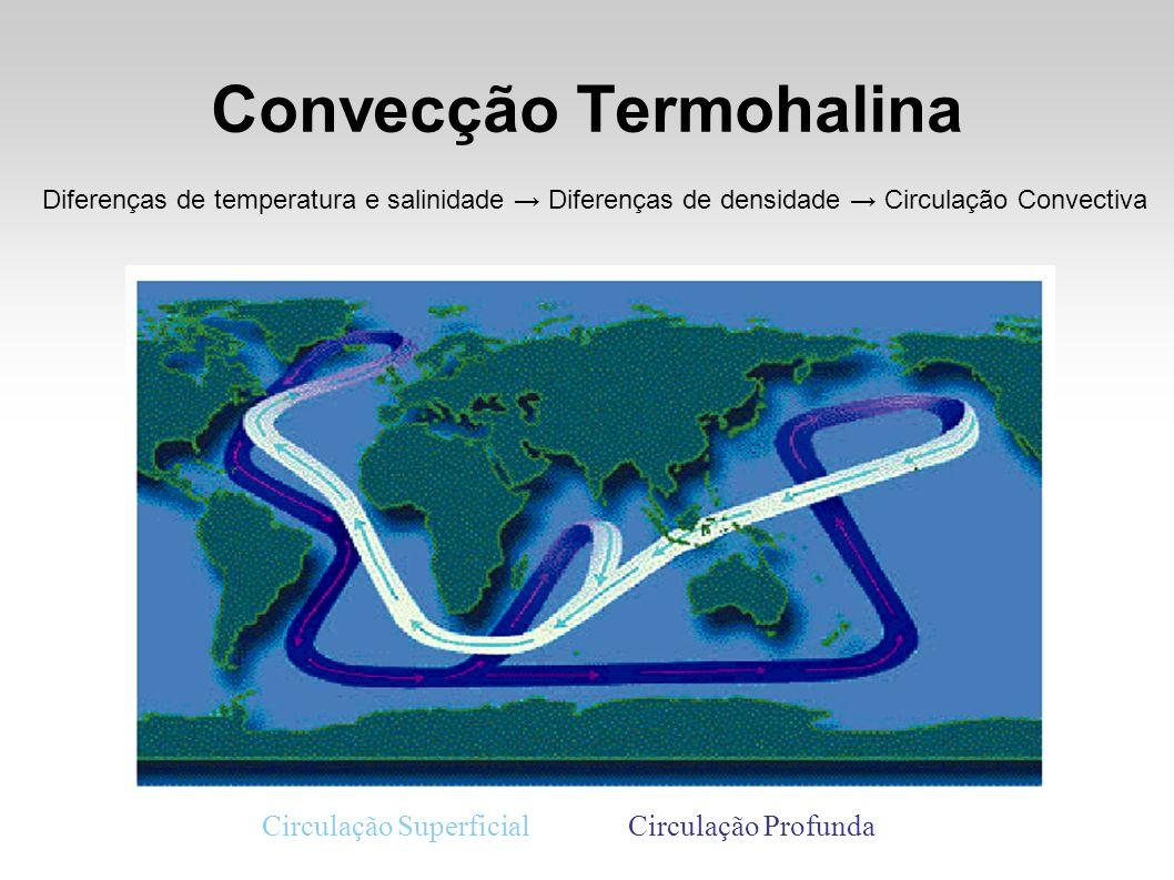 Convecção Termohalina