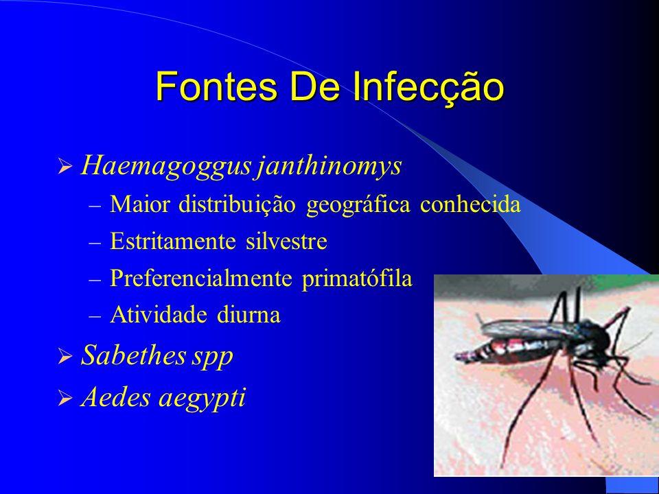Fontes De Infecção Haemagoggus janthinomys Sabethes spp Aedes aegypti