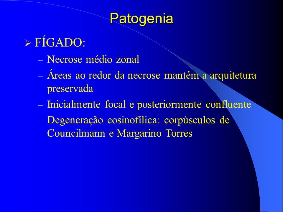 Patogenia FÍGADO: Necrose médio zonal