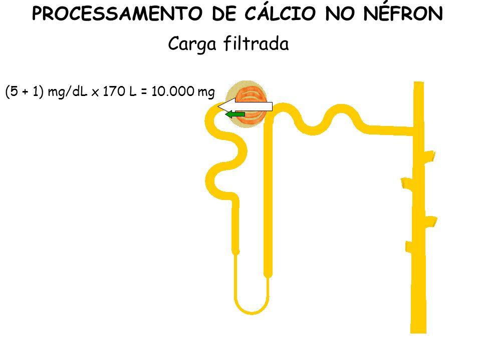 PROCESSAMENTO DE CÁLCIO NO NÉFRON