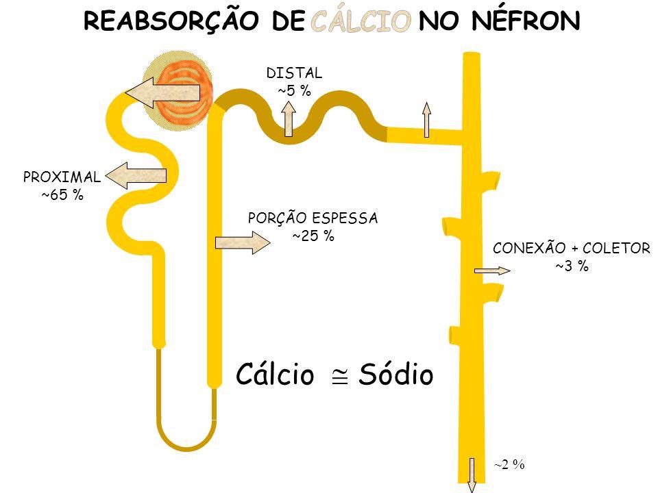 REABSORÇÃO DE SÓDIO NO NÉFRON
