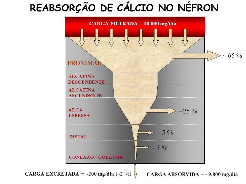 REABSORÇÃO DE CÁLCIO NO NÉFRON