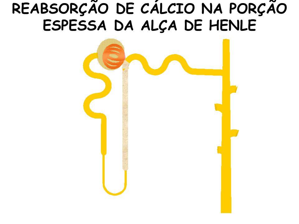 REABSORÇÃO DE CÁLCIO NA PORÇÃO ESPESSA DA ALÇA DE HENLE