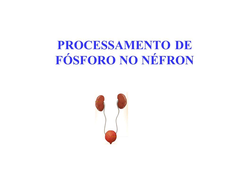 PROCESSAMENTO DE FÓSFORO NO NÉFRON