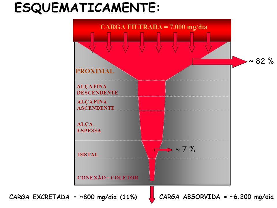 ESQUEMATICAMENTE: ~ 82 % ~ 7 % CARGA FILTRADA = 7.000 mg/dia PROXIMAL