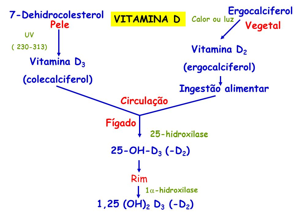 Ergocalciferol 7-Dehidrocolesterol VITAMINA D Pele Vegetal Vitamina D2