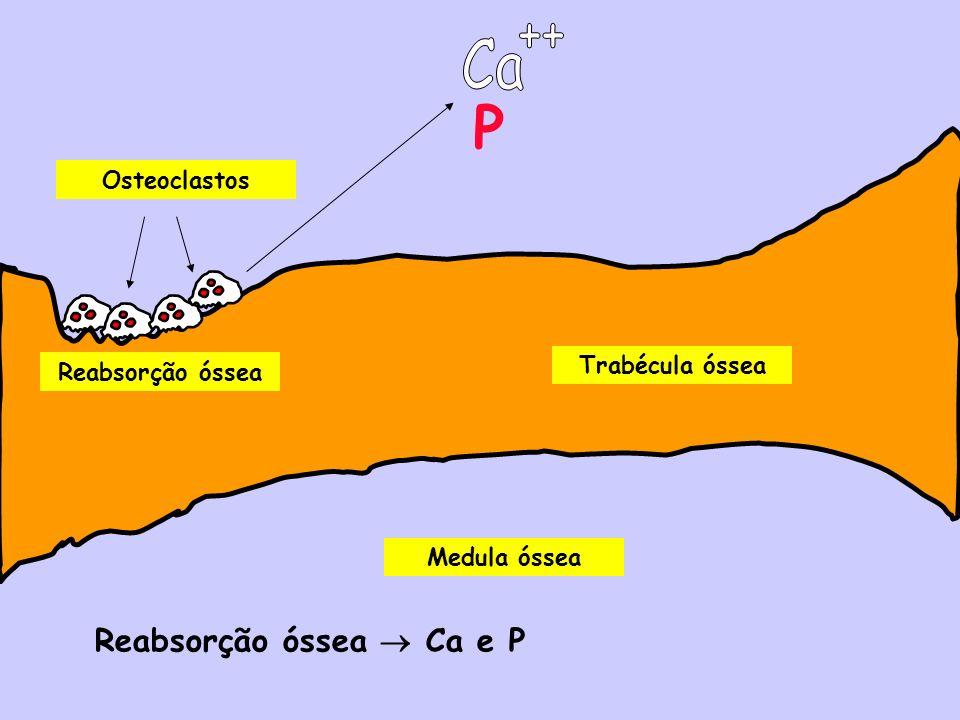 P ++ Ca Reabsorção óssea  Ca e P Osteoclastos Trabécula óssea