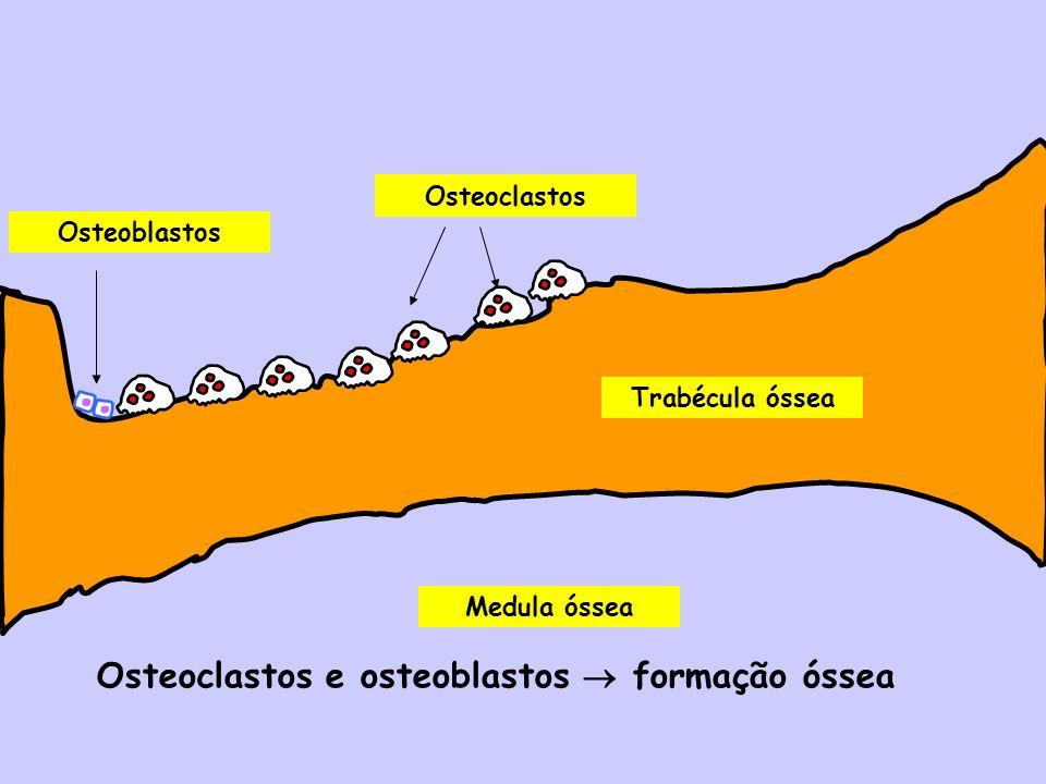 Osteoclastos e osteoblastos  formação óssea
