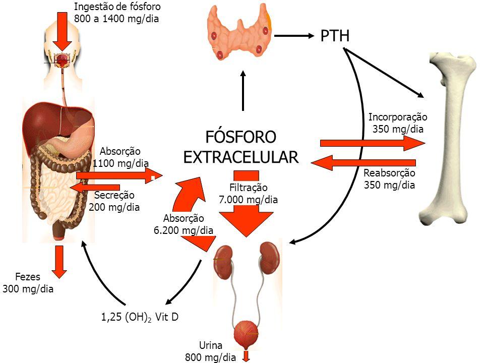 FÓSFORO EXTRACELULAR PTH 1,25 (OH)2 Vit D Ingestão de fósforo