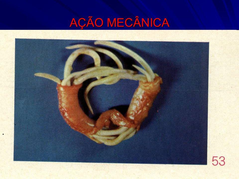 AÇÃO MECÂNICA