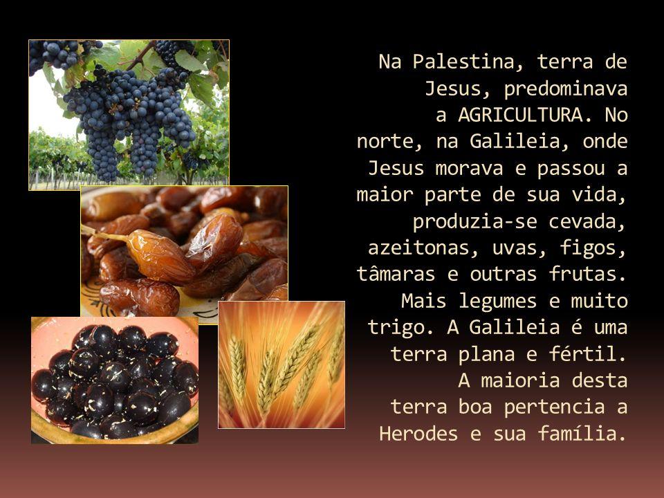Na Palestina, terra de Jesus, predominava a AGRICULTURA