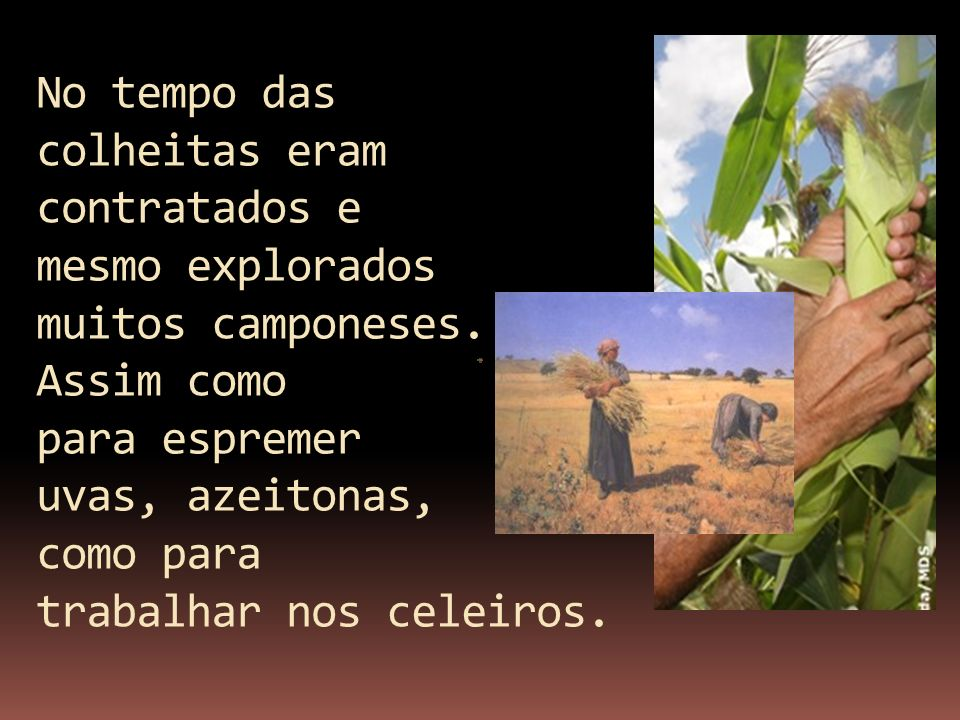 No tempo das colheitas eram contratados e mesmo explorados muitos camponeses.