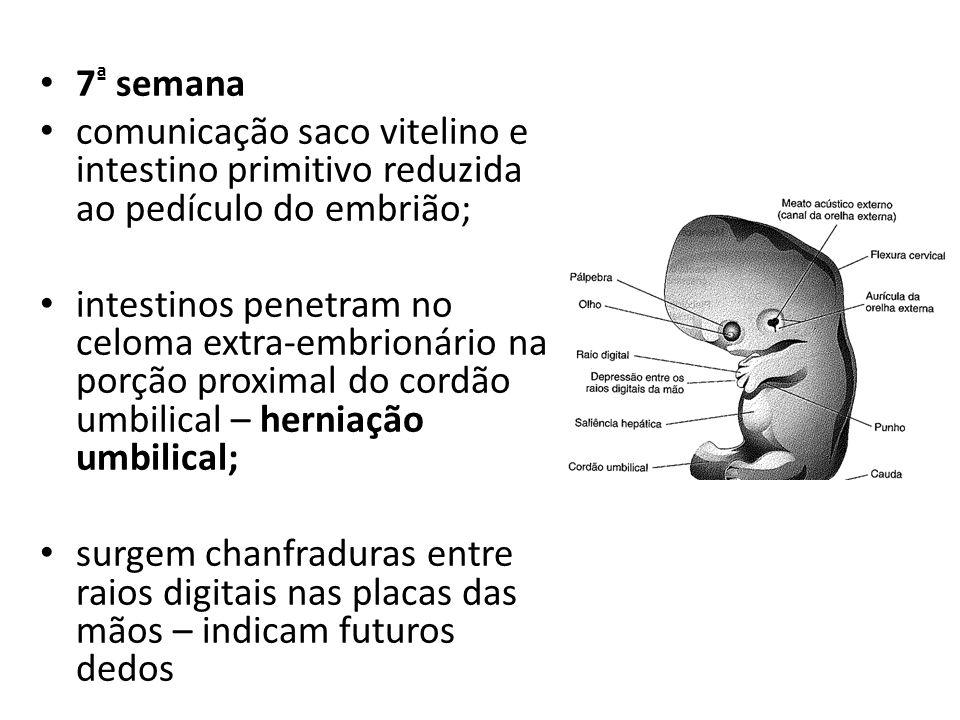 7ª semana comunicação saco vitelino e intestino primitivo reduzida ao pedículo do embrião;