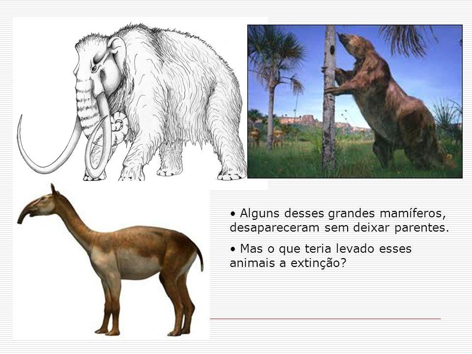 Alguns desses grandes mamíferos, desapareceram sem deixar parentes.