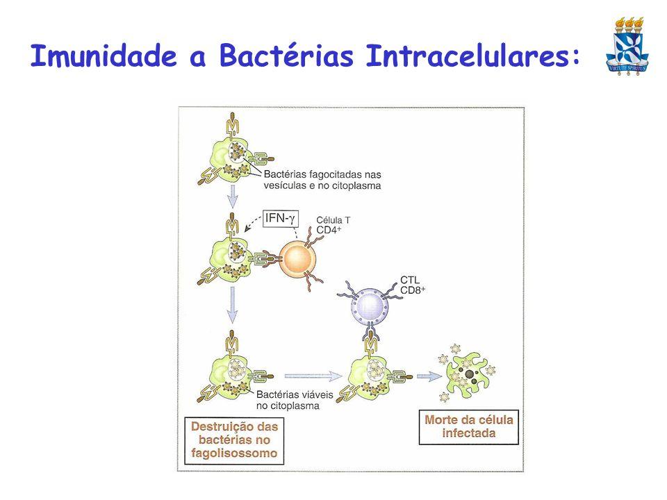 Imunidade a Bactérias Intracelulares: