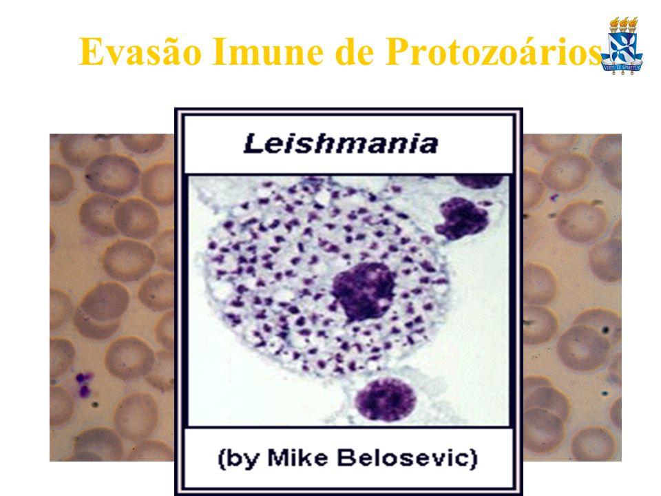 Evasão Imune de Protozoários
