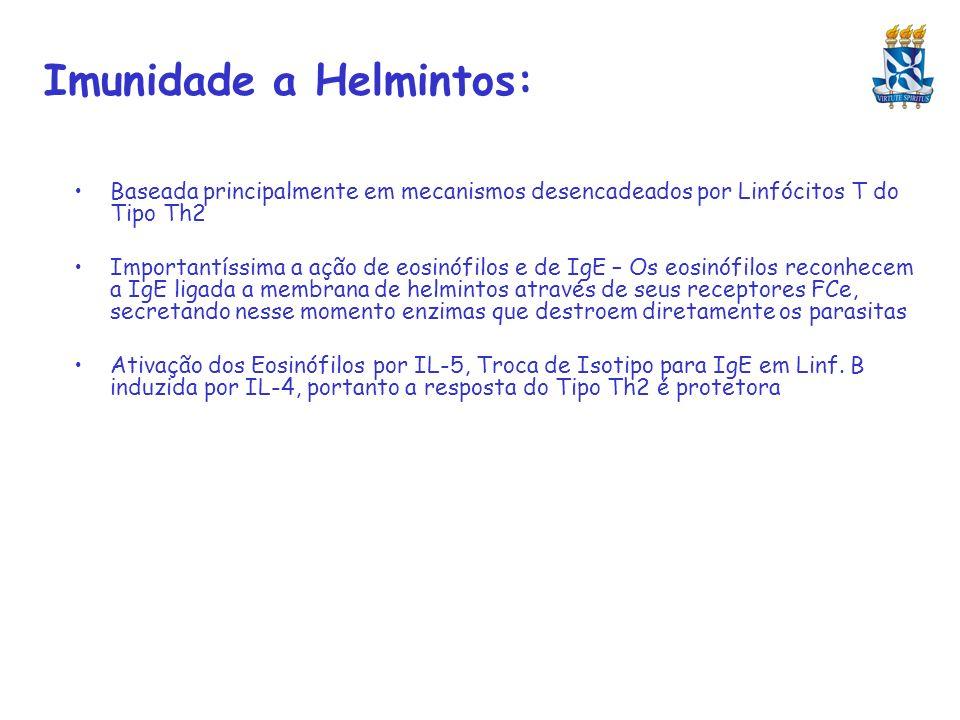 Imunidade a Helmintos: