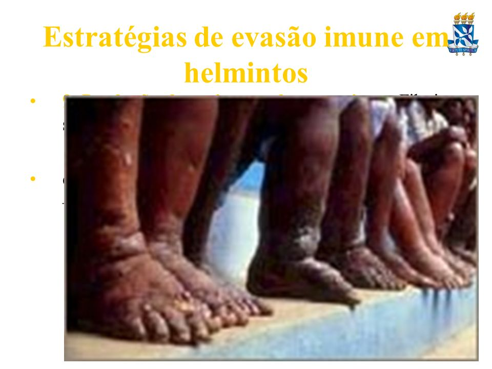 Estratégias de evasão imune em helmintos